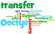 word cloud_transfer